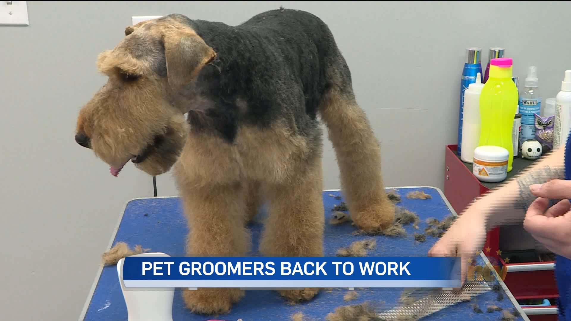 Pet groomers back in business under new guidelines